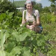 Smiling gardener in vegetable garden. — Stock fotografie