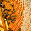 Worker bees — Stock Photo #6391130