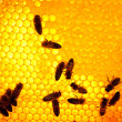Worker bees — Stock Photo #6413642