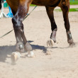 Stock Photo: Hooves of hors