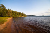 Forest lake coast — Stock Photo