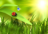 Ladybird on plant over green background — Stock Photo