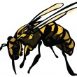 Stock Vector: Wasp on white background