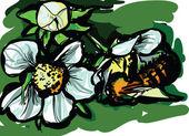 Bee on flowers — Stock Vector