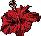 Image de la faune un hibiscus chinois closeup rose — Vecteur