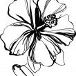 Hibiscus black and white sketch drawing a houseplant - 图库矢量图片
