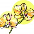 Two orchid with a yellow middle picture — Imagens vectoriais em stock