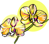Two orchid with a yellow middle picture — Stock Vector