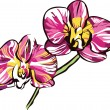 8two orchids with yellow center and violet petals a — Image vectorielle
