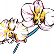 Two orchids with yellow center and pale pink petals — Imagen vectorial