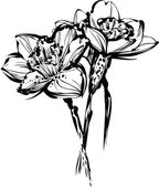 Image black and white sketch of three flowers of narcissus — Vector de stock