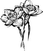 Zwart-wit afbeelding schets van drie bloemen van narcissus — Stockvector