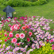 Stock Photo: Blossoming flower beds