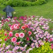 Blossoming flower beds — Stock Photo
