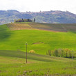 Italy. Val D'Orcia valley. Tuscany landscape — Stock Photo #6237864