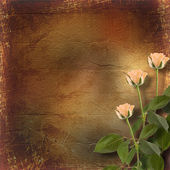 Grunge paper for congratulation with cream roses — Stockfoto