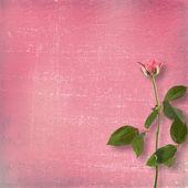 Grunge hintergrund für die gratulation mit schönen rose — Stockfoto