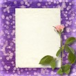 Card for invitation or congratulation with beautiful rose on the — Stock fotografie