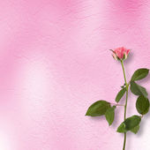 Fondo grunge de felicitación con Rosa hermosa — Foto de Stock