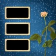 Stock Photo: Grunge background for congratulation with beautiful rose