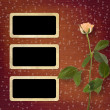 Grunge background for congratulation with beautiful rose - Stock fotografie