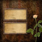 Grunge background for congratulation with beautiful rose — Stock Photo
