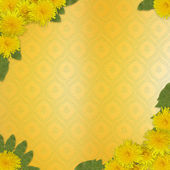 Writing abstract background with bunch of dandelions — Stock Photo