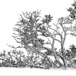 Tree graphic drawing - Stock Photo