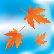 Falling leaves on sky background — Stock Vector