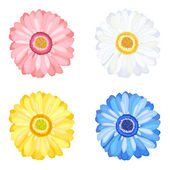 Daisy Gerbera Flowers — Stock Vector