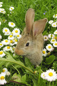 Cute Baby Rabbit in Grass — Stock Photo