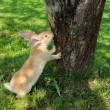 Cute Rabbit Standing on Hind Legs Near Tree — Stock Photo #6017174