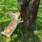 Cute Rabbit Standing on Hind Legs Near Tree — Stock Photo