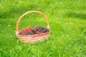 Basket with Black and Red Currants on Green Lawn — Stock Photo