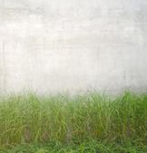 Plantas que crecen cerca de muro de hormigón gris — Foto de Stock
