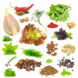 Spice and Herb Set Isolated on White Background - Stock Photo