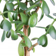 Money tree — Stock Photo #5550920