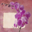 Vintage card with orchid — Stock Photo