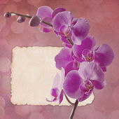 Vintage card with orchid — ストック写真