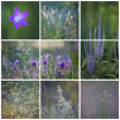 Stock Photo: June collage with red violet flowers and grass