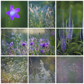 June collage with red violet flowers and grass — Stock Photo
