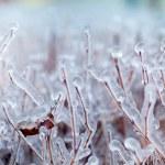 Ice on a tree — Stock Photo