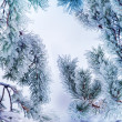 Frozen pine-tree — Stock Photo