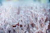 一棵树上的冰 — 图库照片