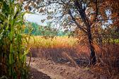 森林火災の後 — ストック写真