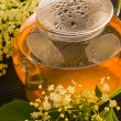 Herbal medicine, tea with elder flower — Stock Photo