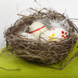 Color eggs in nest — Stock Photo