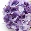 A bouquet of hydrangeas decorated with bracelet and studs — Stock Photo #6727522