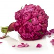 Stock Photo: Peony bouquet