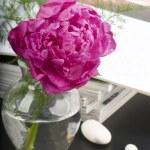 Peony flower boquet — Stock Photo #6728083